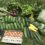 The Springdell Show and Tell – Summer CSA Pickup #5